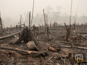 rainforest burning for palm oil plantation Borneo